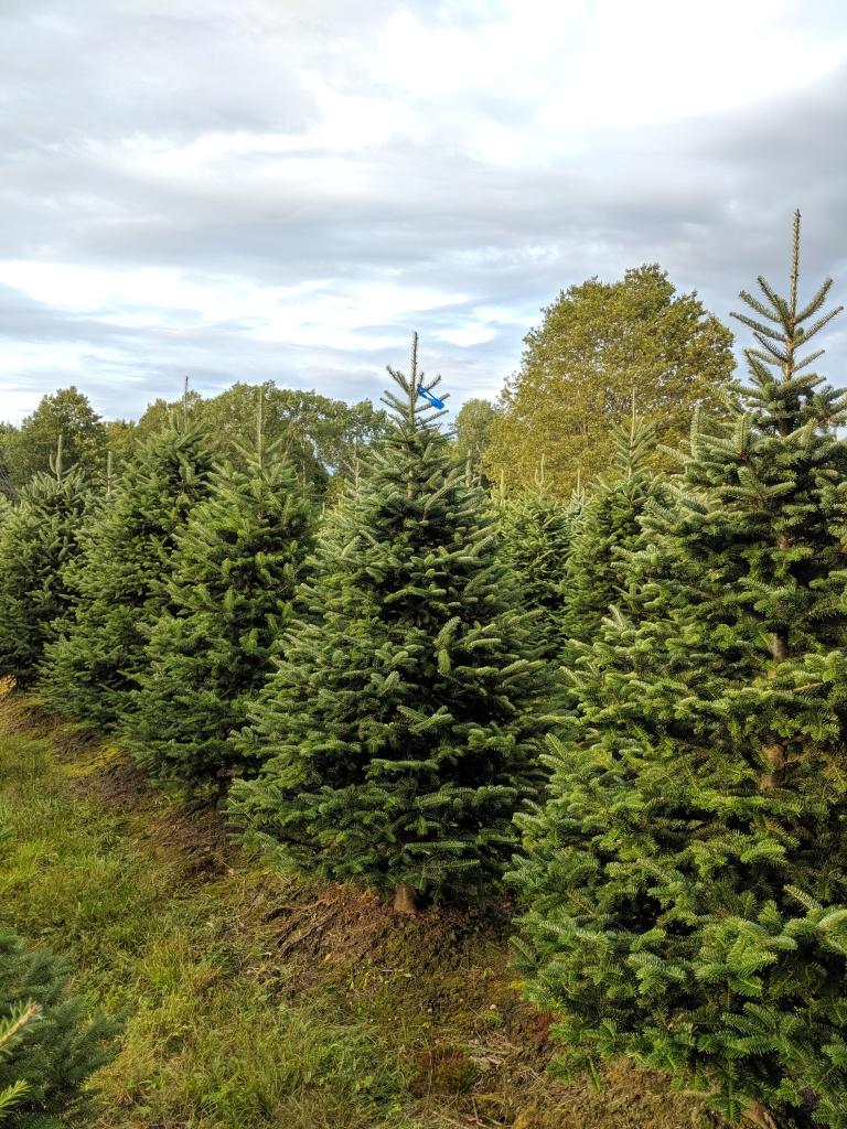 row of christmas trees